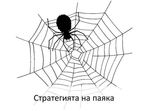 spiderstrategy